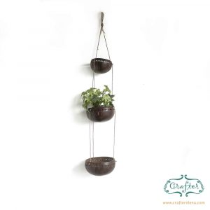 Coconut Shell Plant Hanger with plant IVY