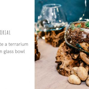 Terrarium in Molten Glass Tutorial2